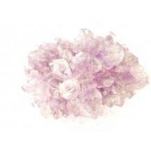 Amethyst (Flower)